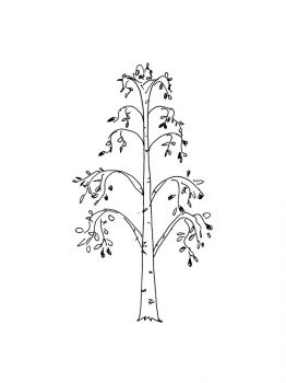 birch-tree-coloring-pages-20