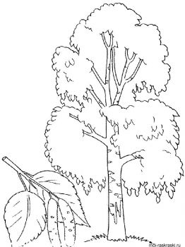 birch-tree-coloring-pages-7