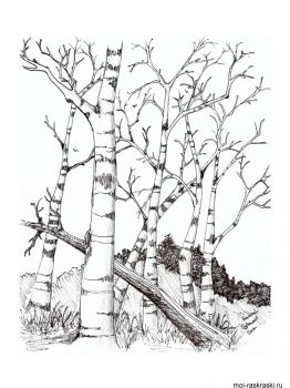 birch-tree-coloring-pages-8