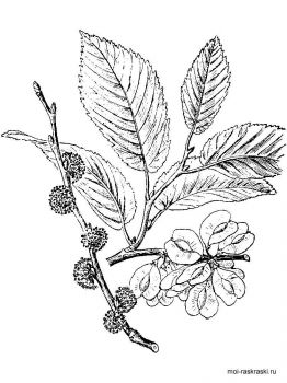 elm-tree-coloring-pages-5