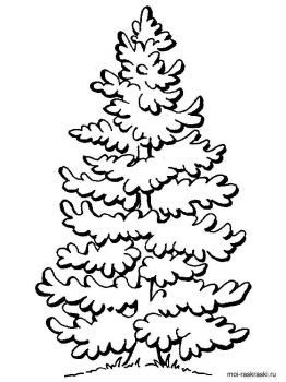fir-tree-coloring-pages-1