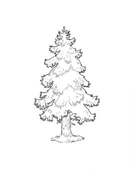 fir-tree-coloring-pages-21