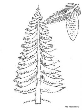fir-tree-coloring-pages-4