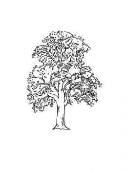 linden-tree-coloring-pages-11