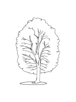 linden-tree-coloring-pages-13