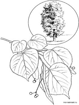 linden-tree-coloring-pages-3