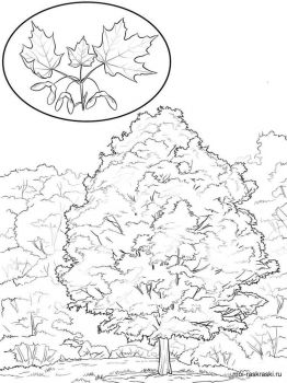 maple-tree-coloring-pages-11