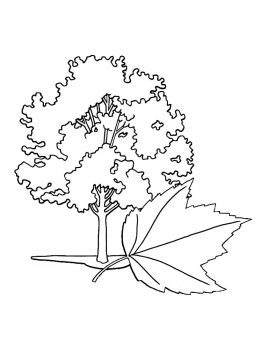 maple-tree-coloring-pages-12
