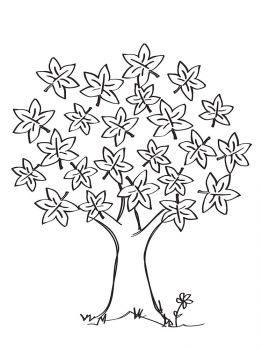 maple-tree-coloring-pages-14