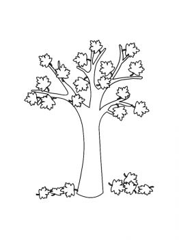 maple-tree-coloring-pages-15