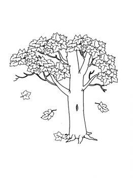 maple-tree-coloring-pages-16
