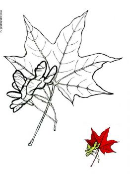 maple-tree-coloring-pages-3