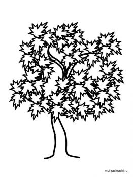 maple-tree-coloring-pages-8