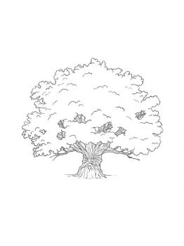 oak-tree-coloring-pages-17