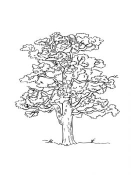 oak-tree-coloring-pages-20