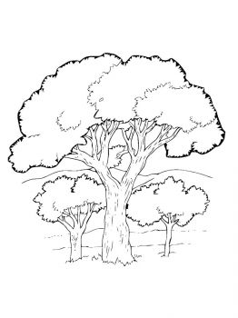 oak-tree-coloring-pages-23