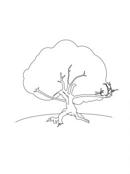 oak-tree-coloring-pages-25