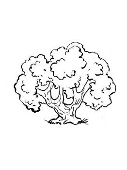 oak-tree-coloring-pages-31