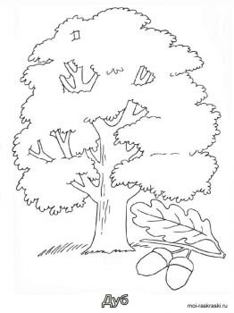oak-tree-coloring-pages-4
