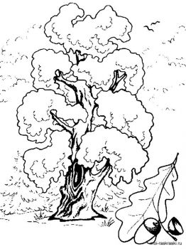oak-tree-coloring-pages-7