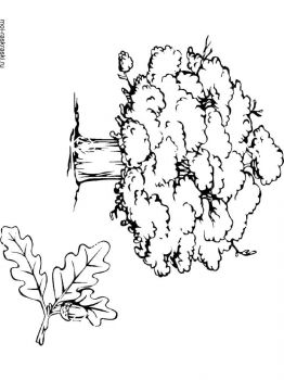 oak-tree-coloring-pages-8