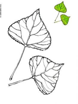poplar-tree-coloring-pages-1