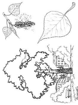 poplar-tree-coloring-pages-2