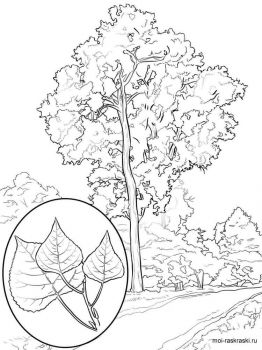 poplar-tree-coloring-pages-4