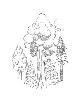 sequoia-tree-coloring-pages-7
