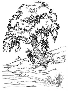 willow-tree-coloring-pages-10