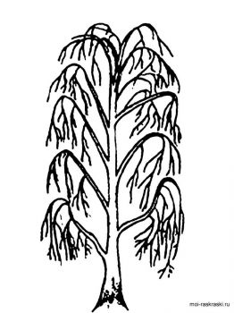 willow-tree-coloring-pages-4